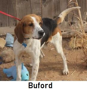 Beagles & Buddies: PET ADOPTION, BEAGLE SHELTER, DOG RESCUE