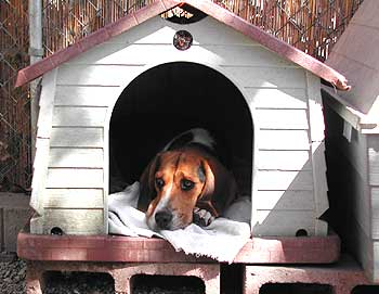 gallery_doghouse.jpg